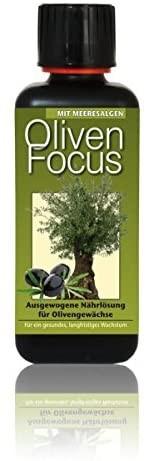 Oliven Focus 300 ml Flüssigdünger Konzentrat